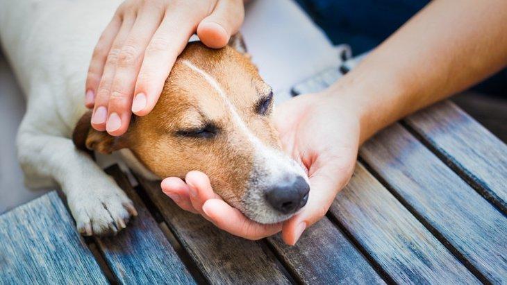犬に顔を近づけると嫌がられる2つの心理