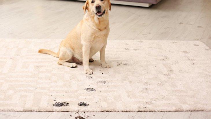 犬の足についた汚れの落とし方