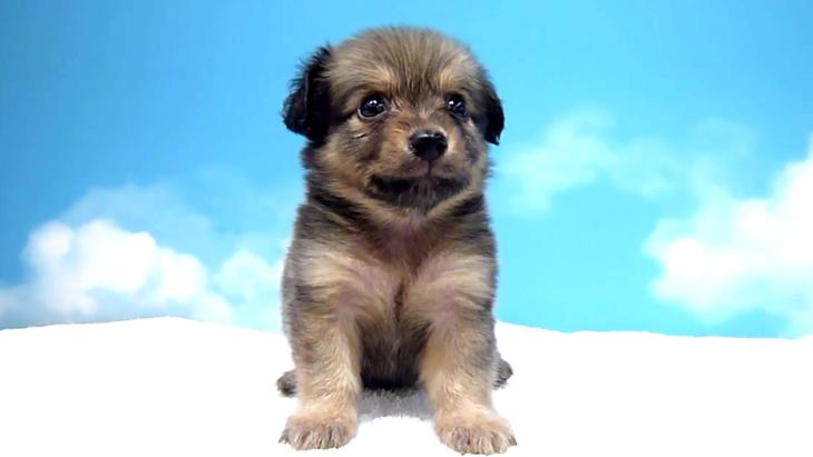 ポメックス(ミックス犬)の知っておきたい性格や飼い方