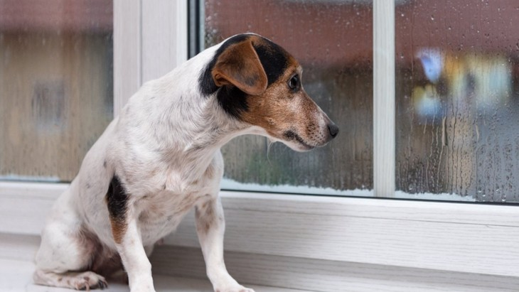 超危険な『犬の病気』5選!致死率100%の恐ろしい疾患も…!