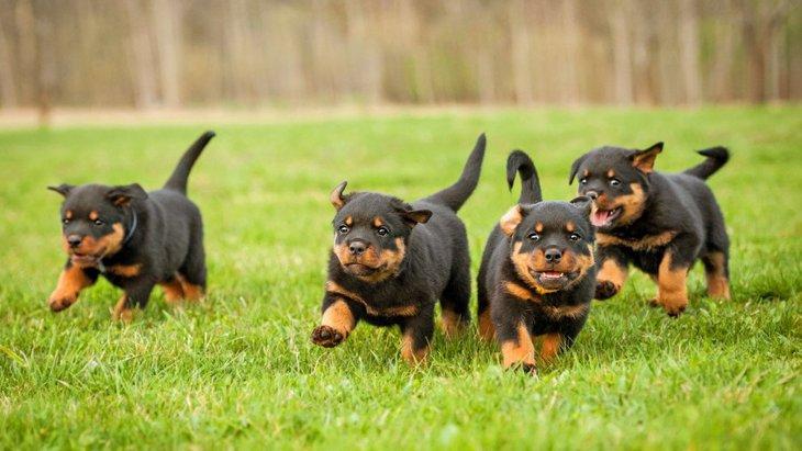 『しつけが難しい』と言われる犬種4選