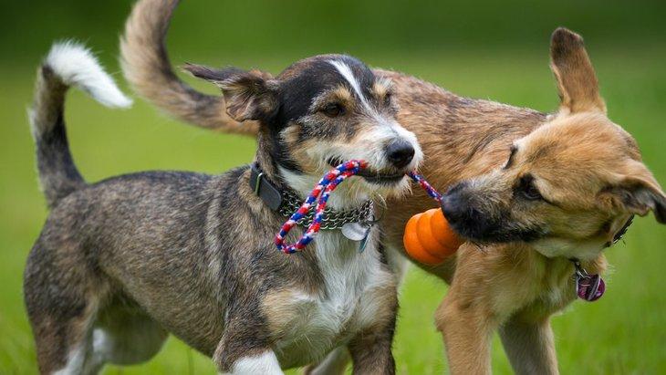 仲良しな犬同士がよく見せる4つの行動