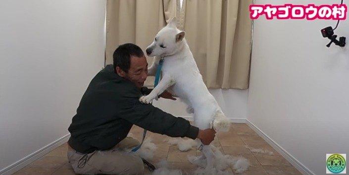 【保護犬】紀州犬が苦手なブラッシングに挑戦したら…衝撃の状態に!