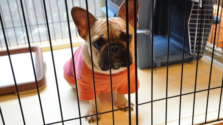 愛犬が留守番を苦手になる原因や理由とは?