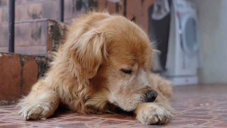 犬が自分の手足を噛む理由と対処法