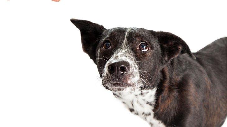 犬の集中力は5分!?効率の良いトレーニングを目指そう!