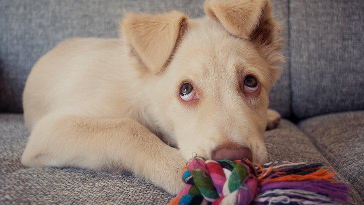 犬が『飼い主に叱られている時』によくする仕草や態度3選