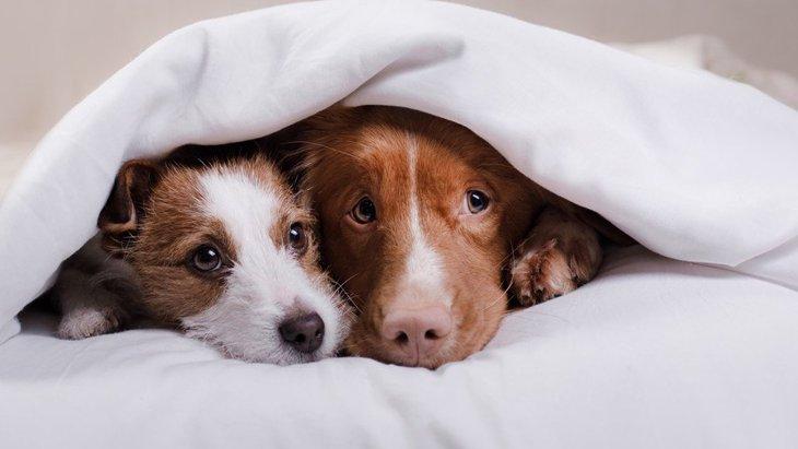 季節の変わり目に注意!犬の気温差対策5つ