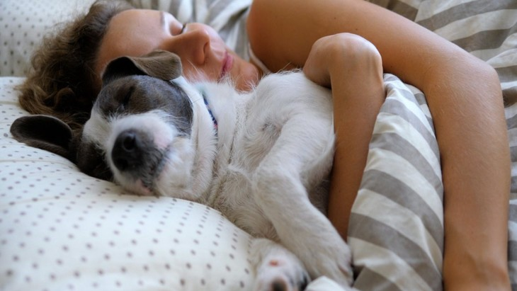 犬が飼い主の首元で寝る時の心理5選