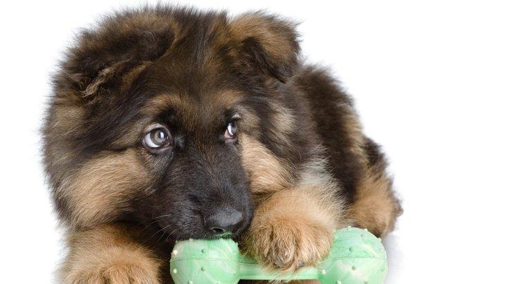 愛犬が遊んでいたおもちゃに唸る2つの理由