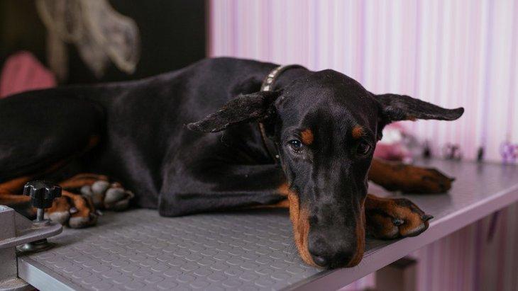 犬が自傷行為をしてしまう理由3選 原因からひも解く対処法を解説