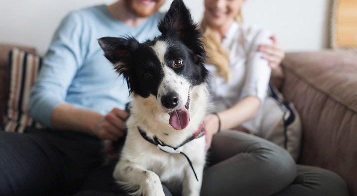 これを守れない人は犬を飼うべきではない!犬の飼い主に課せられている『6つの義務』