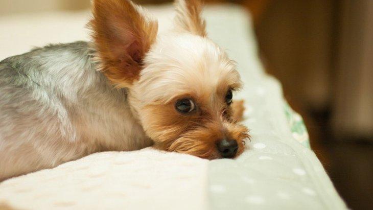 犬のくしゃみが止まらない!主な原因や病気、対処法から予防法まで