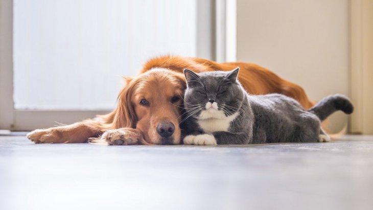 犬と一緒に飼える相性が良い動物4選