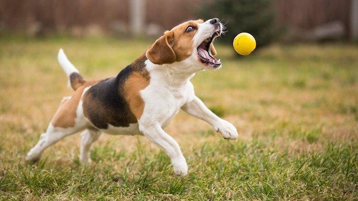 犬が興奮するとコマンドを聞いてくれない!適切な対処法とは