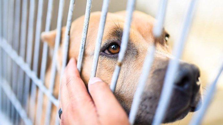 アニマルシェルターに収容された犬猫達の存在を知って下さい…