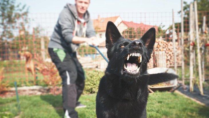 散歩中、急に怒りだす犬の心理とは?