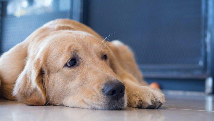 犬が『我慢』をしている時に見せる行動や仕草5選