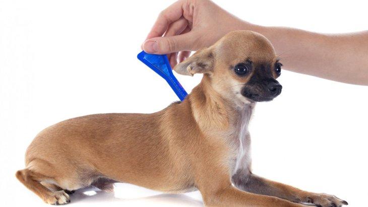 犬のバルトネラ症の正確に診断方法は?複数のテストについての研究結果