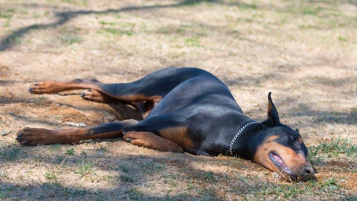 犬がウンチを体にこすりつけてしまう理由と改善方法