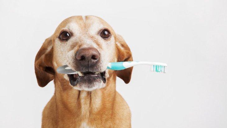 口臭がひどくなりやすい犬の特徴5つ!あなたの愛犬は大丈夫?