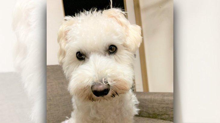 愛犬に聞いた「うちに来て幸せ?」の答え|LAYLAのペットリーディング