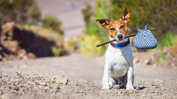 犬が飼い主から逃げるときの理由4つ