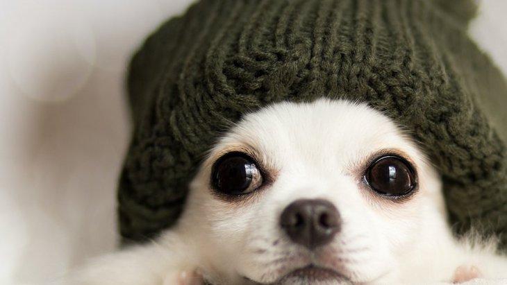 冬にしてはいけない犬へのNG行為3つ