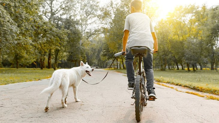 気づかぬうちに…!犬を危険な目に遭わせてしまう『NG行為』8選