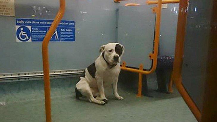 公共バスの中で置き去りにされてしまった1頭の犬の奇跡!