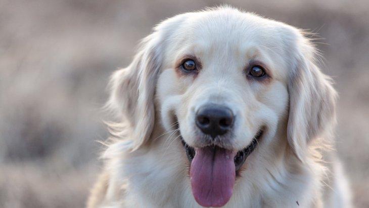 犬に正しく気持ちを伝える方法3選!間違ったやり方は勘違いされてしまう可能性も?