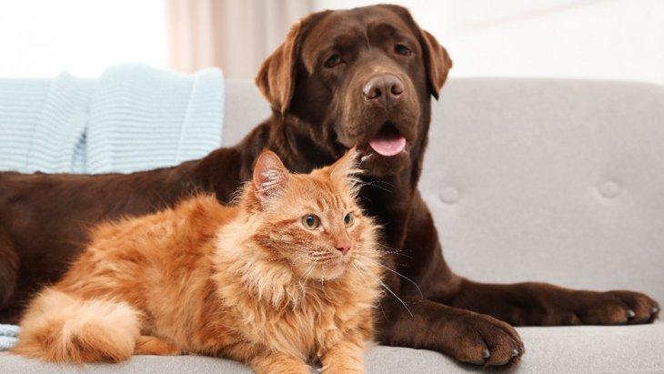 豪州での調査〜ロックダウン中の犬と猫とそれぞれの飼い主の反応の違い