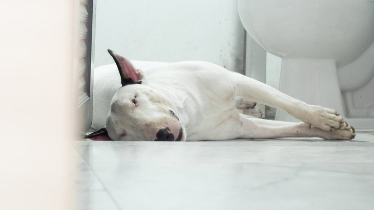 やめてほしい!犬がトイレで寝る心理4つと止めさせる方法