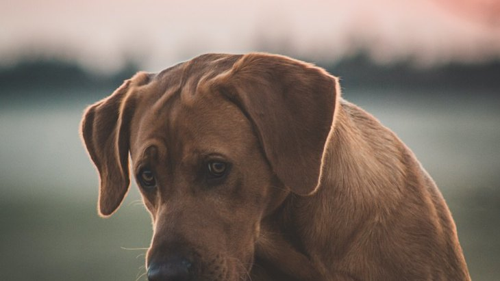 犬がやる気をなくしてしまう飼い主のNG行為4選!どんな対応をすればいいの?