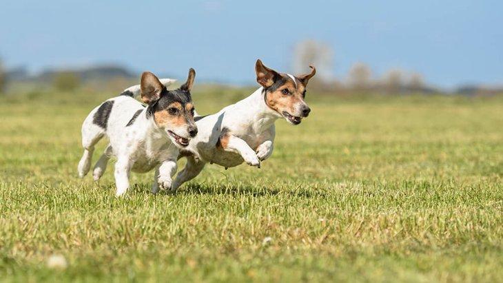 犬が走り回る4つの理由