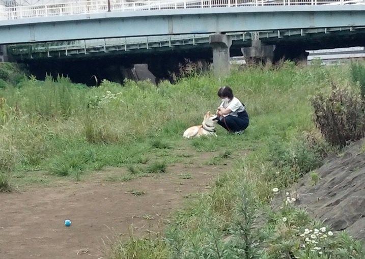 「ママぁ♡疲れちゃった」動かない秋田犬と途方に暮れるヌッシ