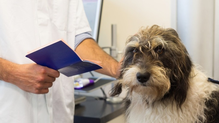 犬の「尿検査」で分かる事とは?
