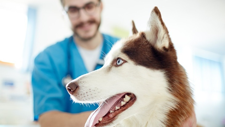 動物病院の小さな仲間『院内犬』について