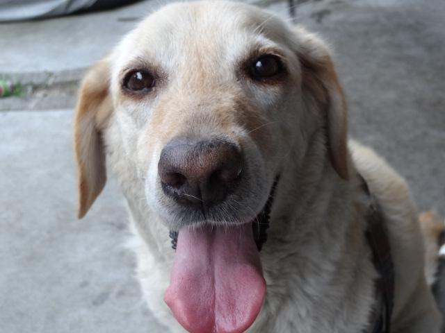 「ハーネスをはずして」が伝える、引退した盲導犬たちの暮らし
