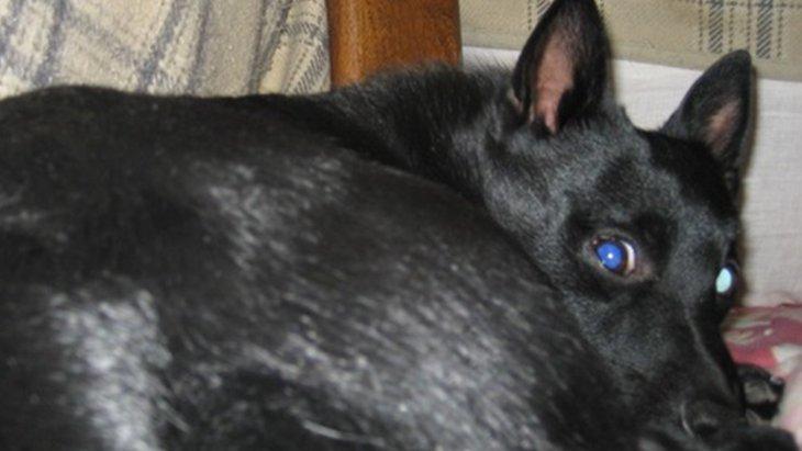 犬に予知能力があるのか検証してみました