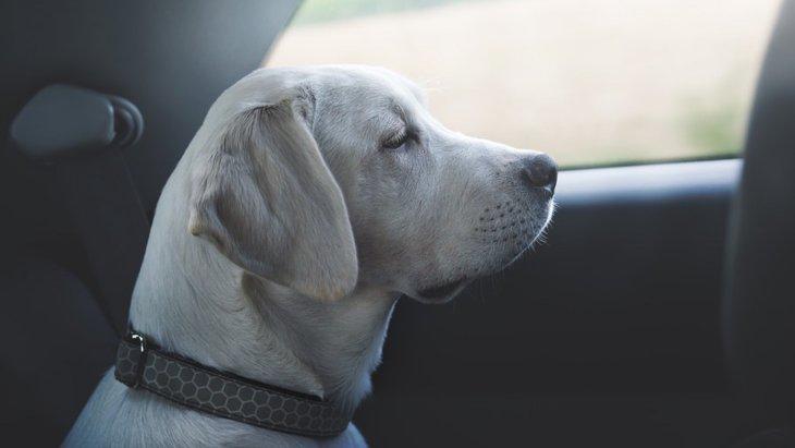 犬が車に乗るのを嫌がる理由と対策