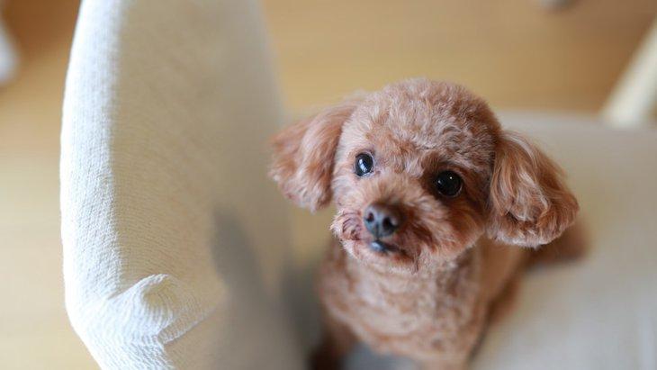 かわいい我が子の為にも考えたい、犬への「過保護」が与える2つの影響