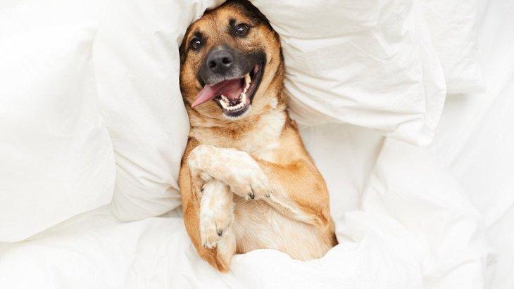 ずっと見ていられる…♡犬が見せる『可愛い姿勢』8選
