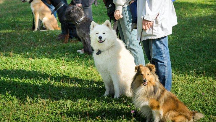 トレーニング方法の違いが犬と飼い主の絆に影響を及ぼすという研究結果