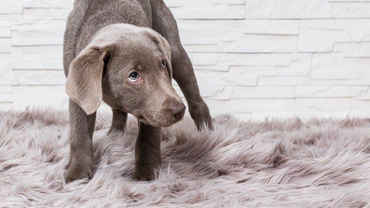犬の腰が引けているときの心理とは?