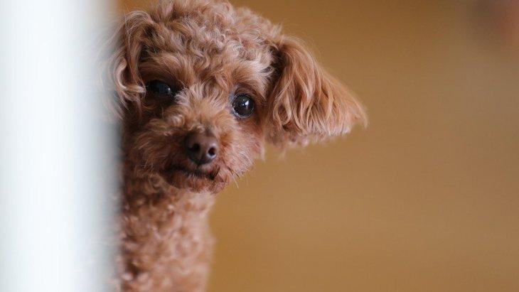 犬が飼い主のお風呂を覗きに来る心理4つ