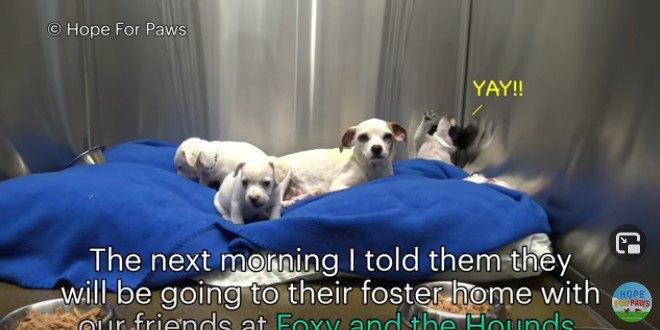 コンテナの下に隠れる親子。子犬たちはノミに栄養を吸い取られていた