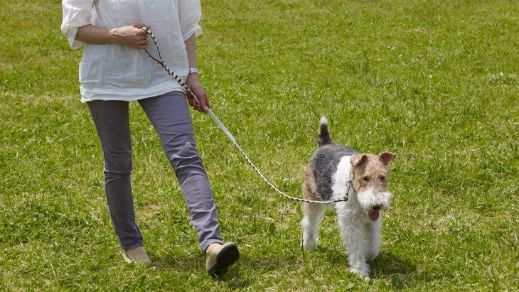 犬を飼うと苦労する人の特徴4つ