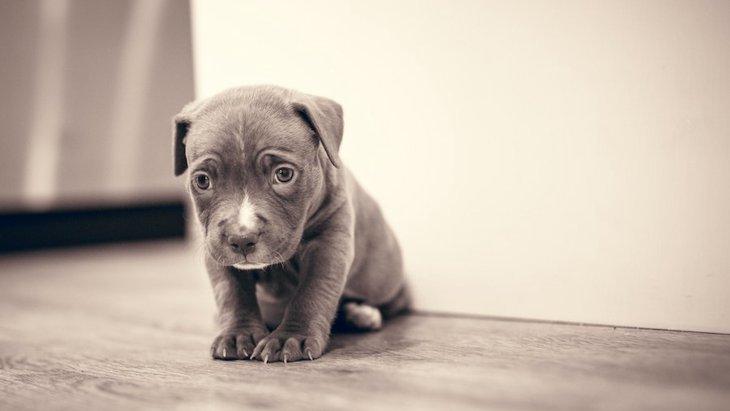 犬を褒めずに叱ってばかりいるとどうなるの?