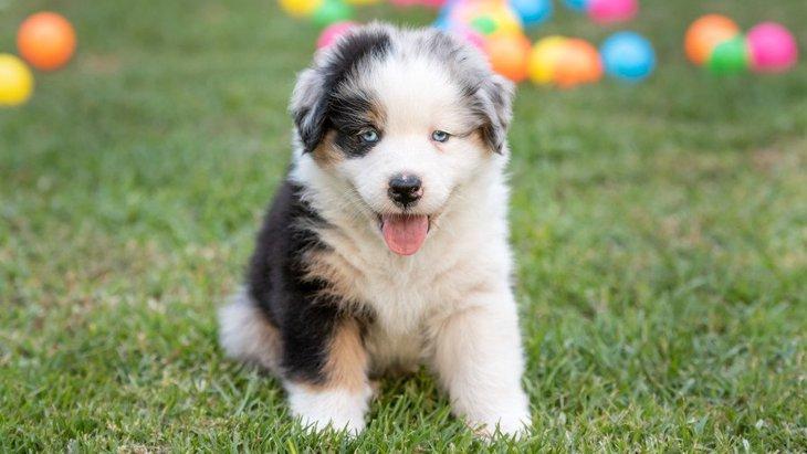 愛犬を『パピーパーティー』に連れていくメリット・デメリットを考える